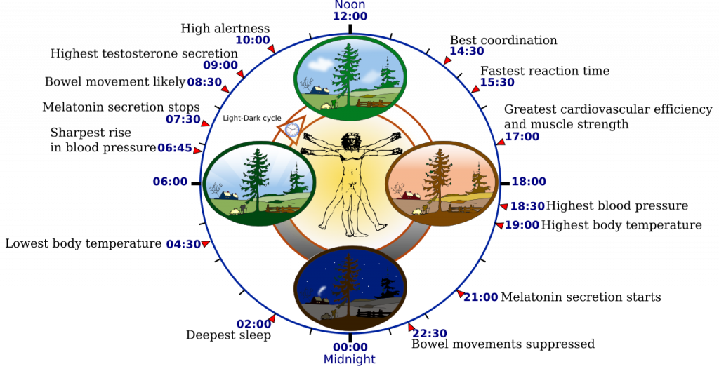 Human Circadian System